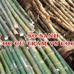 Sự khác nhau giữa cọc cừ tràm và cọc tre và cọc bê tông