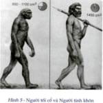 sự khác nhau giữa người tối cổ và người tinh khôn