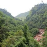Rừng trồng và rừng tự nhiên có gì khác nhau? Thủ tục thu hồi đất rừng như thế nào?